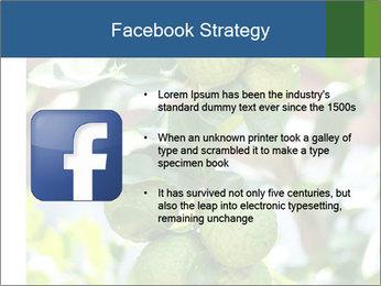 Bergamot on Tree PowerPoint Templates - Slide 6