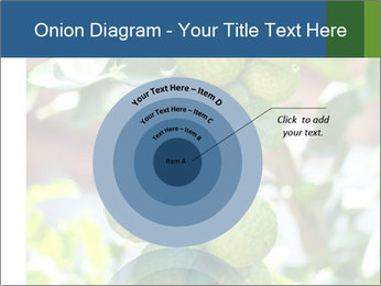 Bergamot on Tree PowerPoint Template - Slide 61