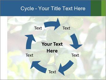 Bergamot on Tree PowerPoint Template - Slide 62