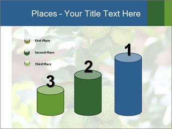 Bergamot on Tree PowerPoint Template - Slide 65