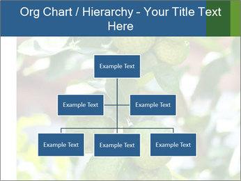 Bergamot on Tree PowerPoint Templates - Slide 66