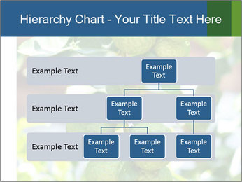 Bergamot on Tree PowerPoint Template - Slide 67
