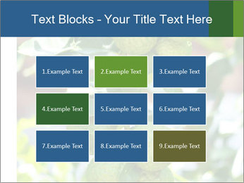Bergamot on Tree PowerPoint Templates - Slide 68