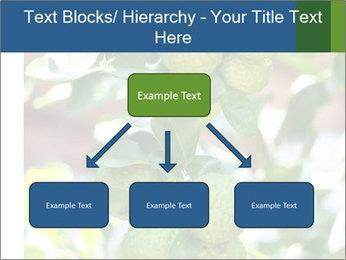 Bergamot on Tree PowerPoint Template - Slide 69