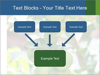 Bergamot on Tree PowerPoint Template - Slide 70