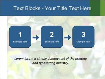 Bergamot on Tree PowerPoint Template - Slide 71