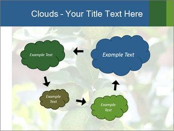 Bergamot on Tree PowerPoint Template - Slide 72
