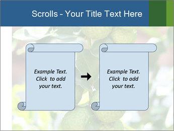 Bergamot on Tree PowerPoint Template - Slide 74