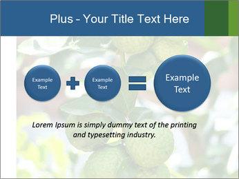Bergamot on Tree PowerPoint Template - Slide 75