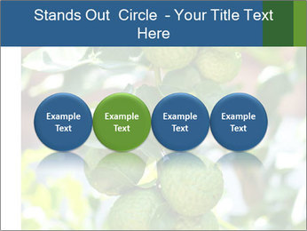 Bergamot on Tree PowerPoint Template - Slide 76