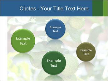 Bergamot on Tree PowerPoint Template - Slide 77