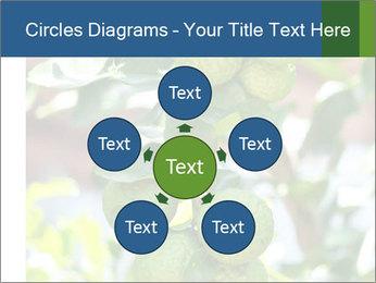 Bergamot on Tree PowerPoint Template - Slide 78