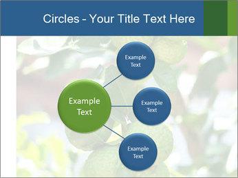 Bergamot on Tree PowerPoint Template - Slide 79