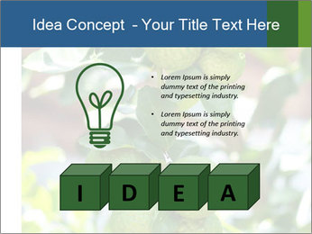 Bergamot on Tree PowerPoint Template - Slide 80