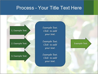 Bergamot on Tree PowerPoint Template - Slide 85