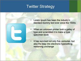 Bergamot on Tree PowerPoint Template - Slide 9