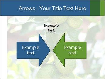 Bergamot on Tree PowerPoint Template - Slide 90