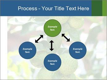 Bergamot on Tree PowerPoint Template - Slide 91