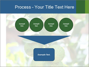 Bergamot on Tree PowerPoint Template - Slide 93