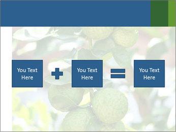 Bergamot on Tree PowerPoint Templates - Slide 95