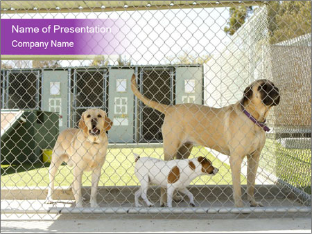 Large and small dogs PowerPoint Template
