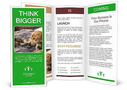 0000088147 Brochure Template