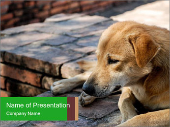 Dog sad PowerPoint Template - Slide 1