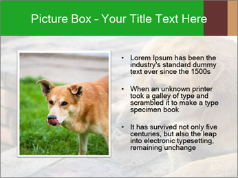 Dog sad PowerPoint Template - Slide 13