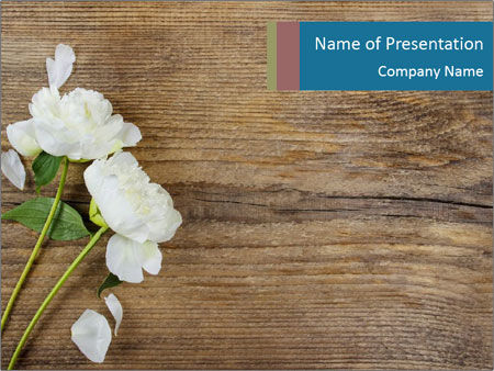 White peonies on wooden background PowerPoint Templates