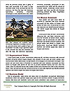 0000088166 Word Template - Page 4