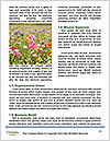 0000088170 Word Templates - Page 4