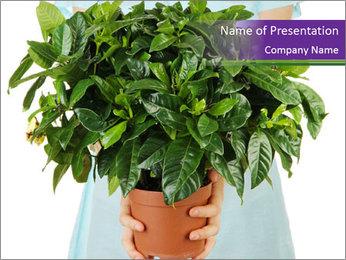Beautiful flower in pot in hands of girl PowerPoint Template - Slide 1