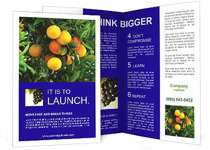 0000088204 Brochure Template
