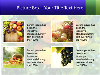Bunch of ripe oranges hanging on a tree PowerPoint Templates - Slide 14