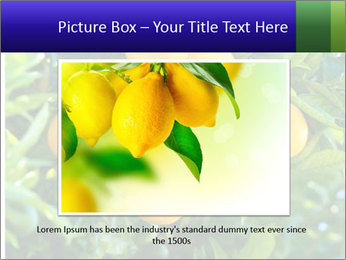Bunch of ripe oranges hanging on a tree PowerPoint Templates - Slide 15