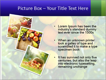 Bunch of ripe oranges hanging on a tree PowerPoint Templates - Slide 17