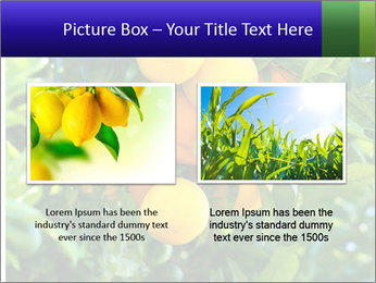 Bunch of ripe oranges hanging on a tree PowerPoint Templates - Slide 18