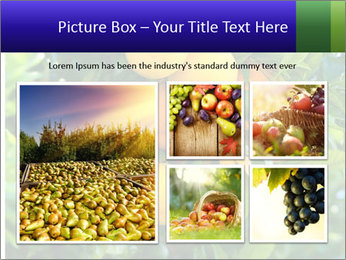 Bunch of ripe oranges hanging on a tree PowerPoint Templates - Slide 19
