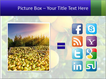 Bunch of ripe oranges hanging on a tree PowerPoint Templates - Slide 21