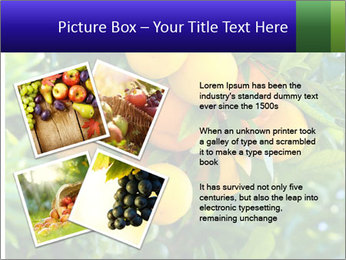 Bunch of ripe oranges hanging on a tree PowerPoint Templates - Slide 23