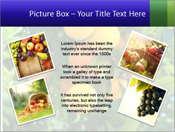 Bunch of ripe oranges hanging on a tree PowerPoint Templates - Slide 24