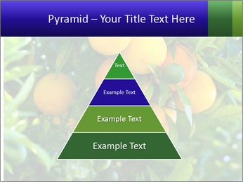 Bunch of ripe oranges hanging on a tree PowerPoint Templates - Slide 30