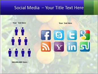 Bunch of ripe oranges hanging on a tree PowerPoint Templates - Slide 5