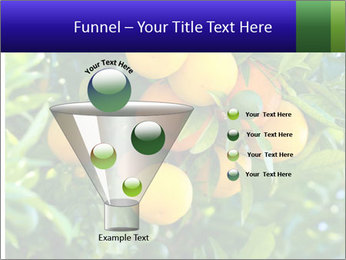 Bunch of ripe oranges hanging on a tree PowerPoint Templates - Slide 63