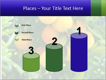 Bunch of ripe oranges hanging on a tree PowerPoint Templates - Slide 65