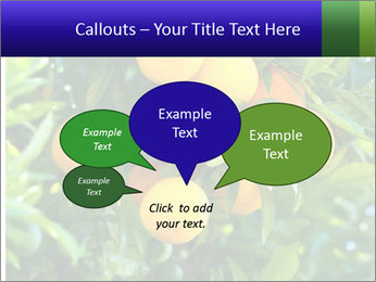 Bunch of ripe oranges hanging on a tree PowerPoint Templates - Slide 73