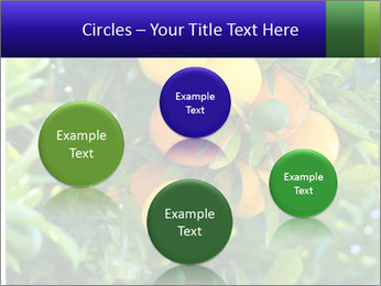Bunch of ripe oranges hanging on a tree PowerPoint Templates - Slide 77