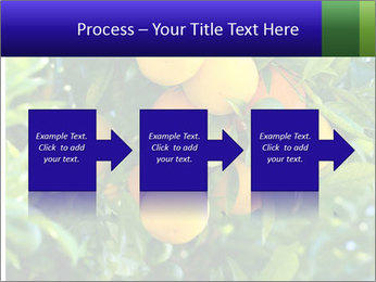 Bunch of ripe oranges hanging on a tree PowerPoint Templates - Slide 88