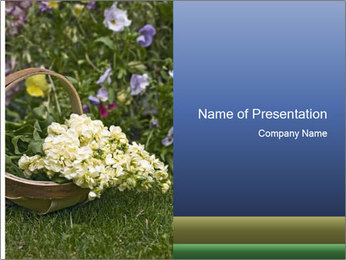 Freshly picked cream Matthiola Incana PowerPoint Template - Slide 1