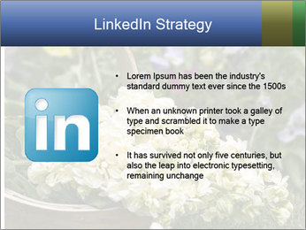 Freshly picked cream Matthiola Incana PowerPoint Template - Slide 12